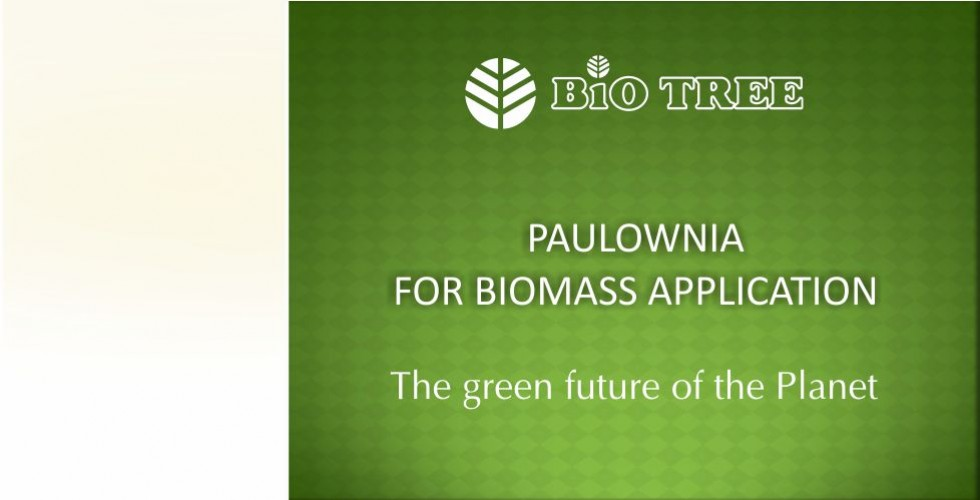 Paulownia – green energy future-page1