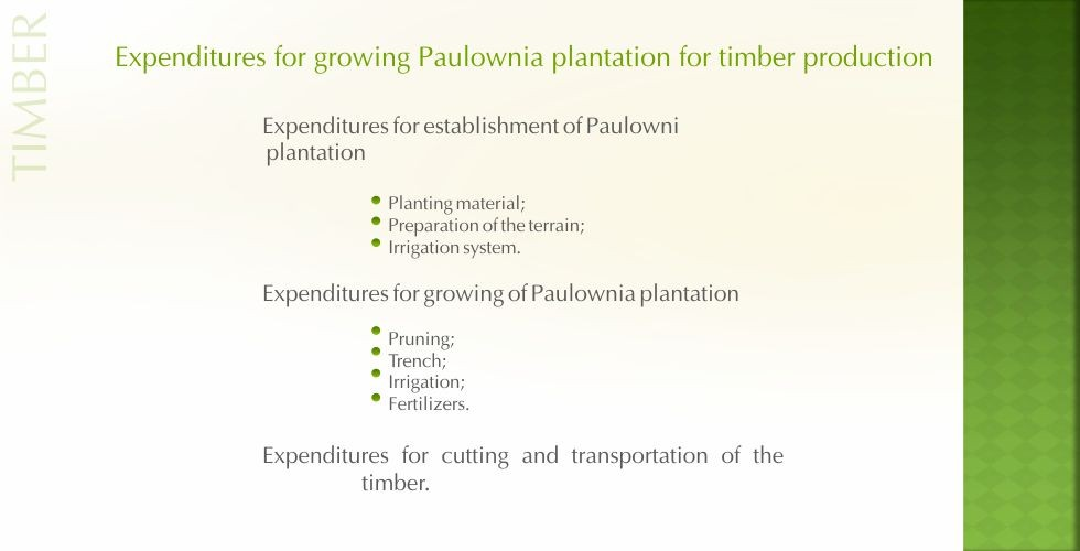 Paulownia – green energy future-page24