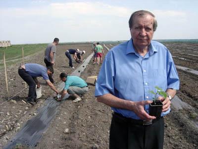 Paulownia Plantation Bellissia in Bachka Topola, May 2012