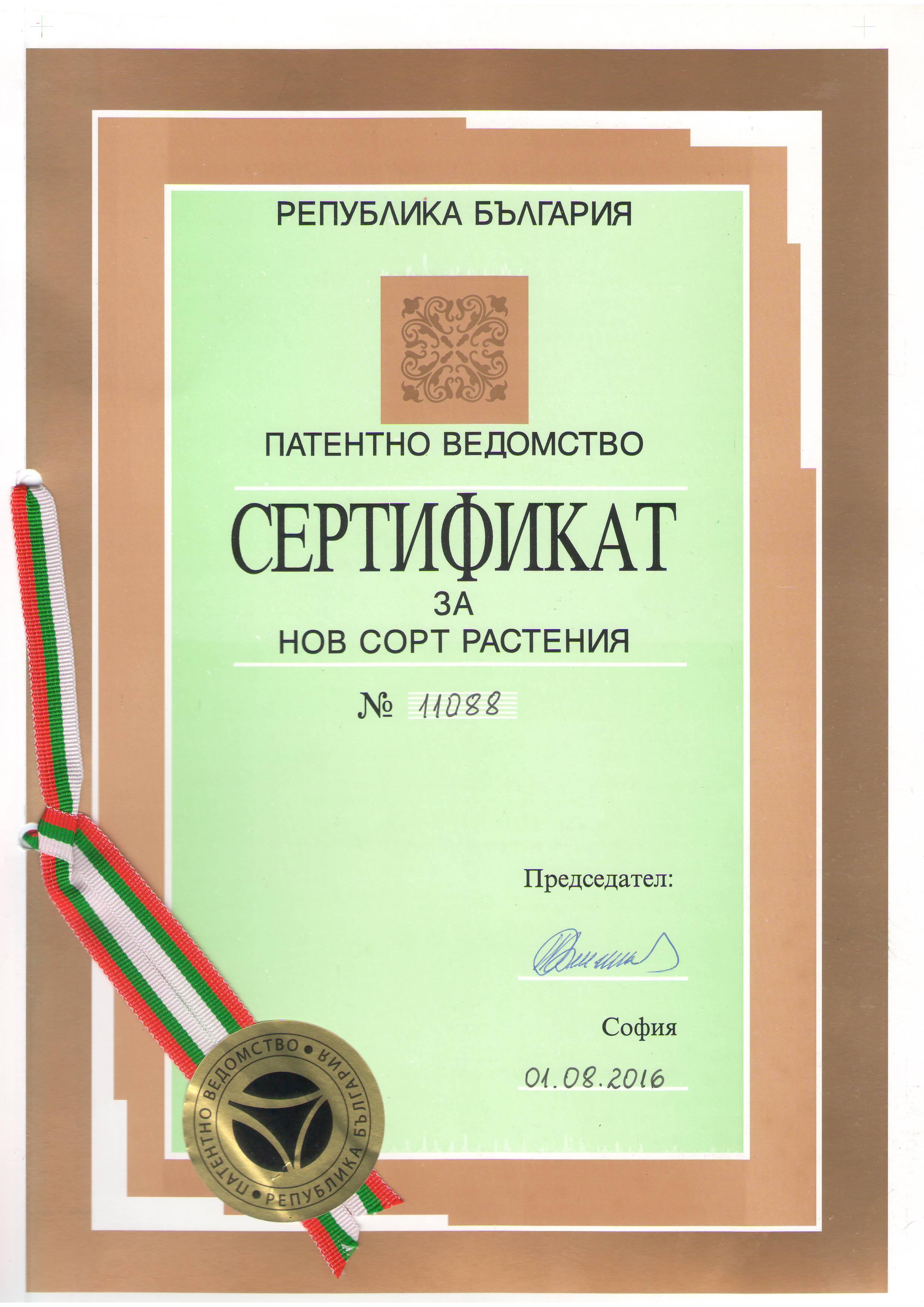 Patent Paulownia OXI