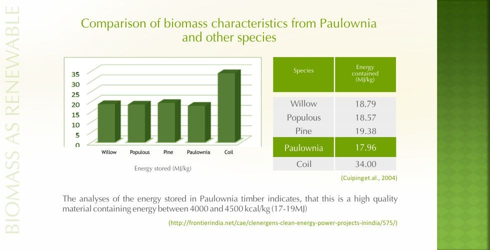 Paulownia – green energy future-page12