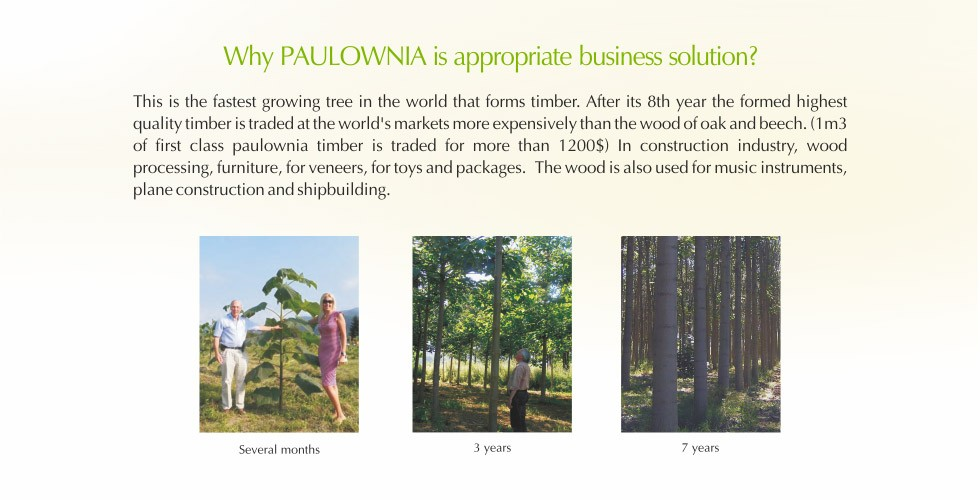 4-Paulownia – promising investment