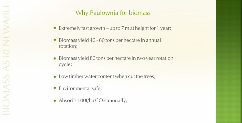 Paulownia – green energy future-page6