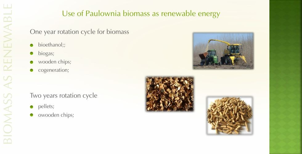 Paulownia – green energy future-page7