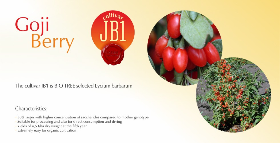 JB1-Goji Beri