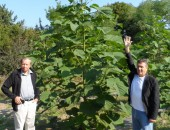 Plantation Bellissia in Misicevo
