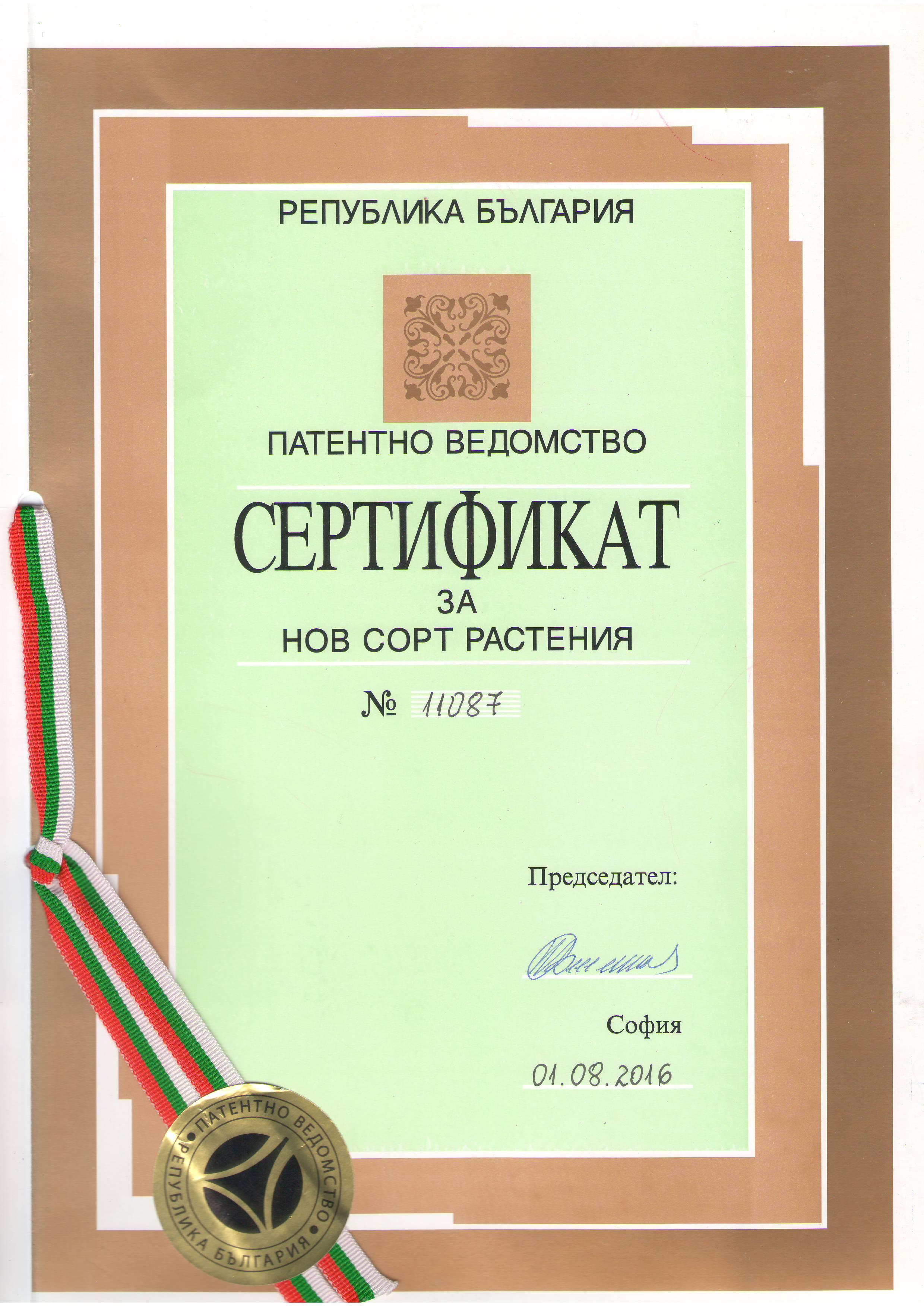 Patent Paulownia Bellissia